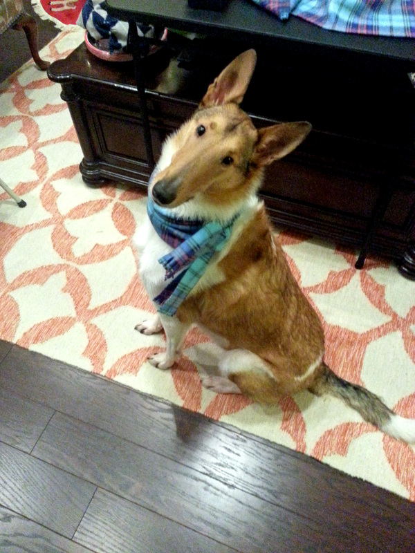 Homemade Dog Scarf