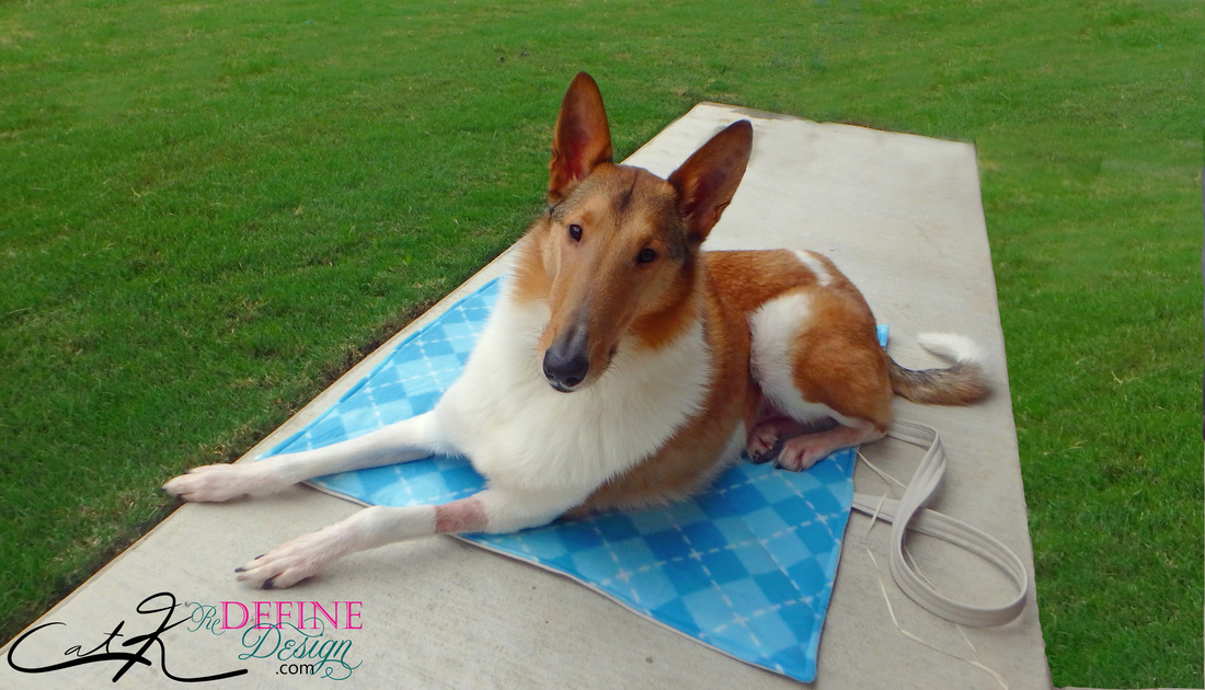 DIY Dog Bed Smooth Collie